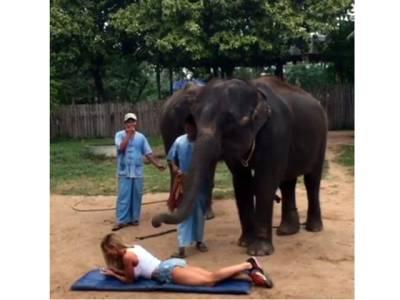 خاتون کے ساتھ ہاتھی کی ناقابل یقین شرارت