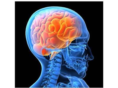 انسانی دماغ سردی میں زیادہ تیز چلتاہے یا گرمی میں؟سائنس نے معمہ حل کر دیا