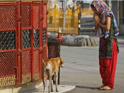 بھارت کا 'اچھے اور برے' کتوں کی پہچان بنانے کا فیصلہ