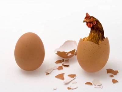 انڈہ پہلے آیا یا مرغی ، پراسرارسوال کا جواب مل گیا