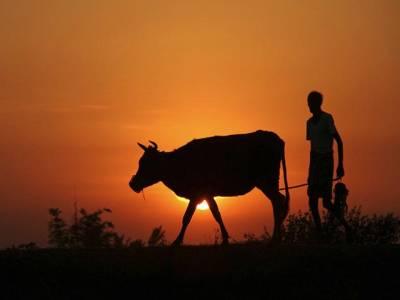 ترقی یافتہ ہونے کے دعویدار بھارت میں ہر گھنٹے بعد ایک کسان معقول معاوضہ نہ ملنے پر خودکشی پر مجبور