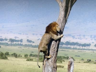 وہ چیز جس نے شیر کو ایسی حالت میں پہنچادیا
