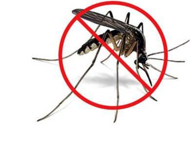 گھر کو مچھروں سے پاک رکھنے کیلئے قدرتی اجزاءسے تیار کردہ انتہائی موثر سپرےتیار کرنے کا طریقہ
