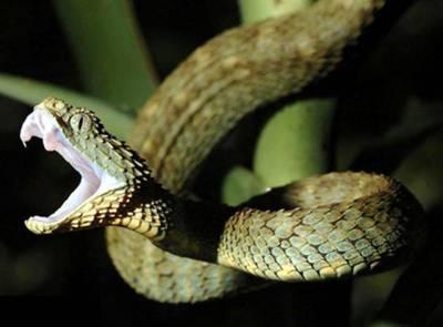 سانپ کاٹ لے تو کیا کرنا چاہئے؟