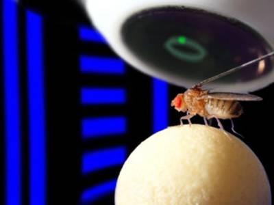 مکھیاں اندھیرے میں راستہ کیسے تلاش کرتی ہیں؟انتہائی حیرت انگیز معلومات