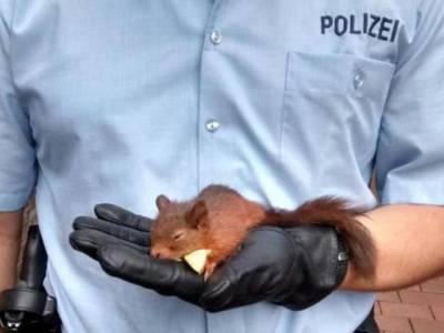 جرمن پولیس نے گلہر ی کو ایسے الزام میں گرفتار کر لیا کہ جان کر آپ کیلئے ہنسی روکنا مشکل ہو جائے گا