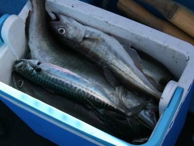 بے وقوف بنگالی شہری مچھلی میں کیا چیز چھپا کر دبئی لانے کی کوشش میں پکڑا گیا؟ جان کر آپ بھی حماقت پر افسوس کریں گے