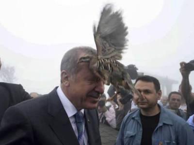 انقرہ میں صدر طیب اردگان نے پرندے آزاد کیے تو ایک ان کے سر پر آن بیٹھا