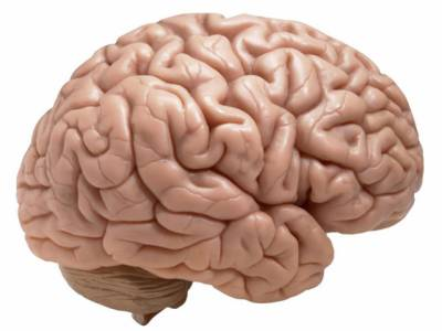 چوتھی جماعت کی کتاب میں انسانی دماغ کا وزن 104کلو لکھ دیا گیا