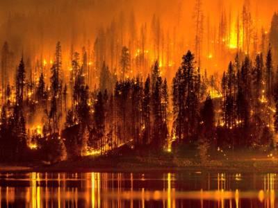 کیلی فورنیا کے جنگلات میں آتشزدگی سے 6افراد ہلاک ، 2600عمارتیں تباہ،کروڑوں ڈالر کا نقصان
