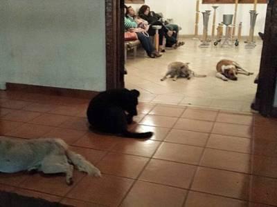 خاتون کی وفات پر آوارہ کتوں نے وفا کی نئی مثال قائم کردی، ایسا کام کہ انسان بھی شرمندہ ہوجائیں