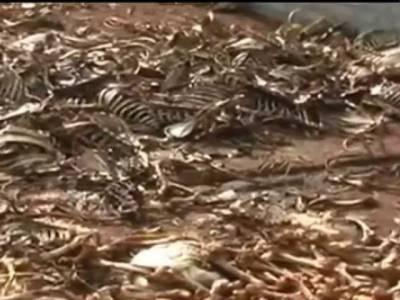 مردہ گھوڑوں ، گدھوں کی ہڈیوں سے گھی بنانے والے یونٹس سیل