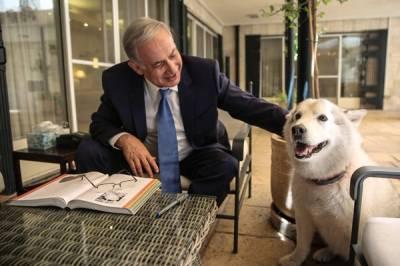 جیسا مالک ویسا ۔۔۔اسرائیلی وزیر اعظم کے کتے نے ڈپٹی وزیر خارجہ کے شوہر سمیت دو مہمانوں کو کاٹ لیا