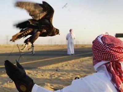 قطری شہزادے عبدالحادی شکار کیلئے نورپور تھل پہنچ گئے