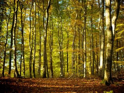 ہزاروں درختوں کی فروخت کے الزام میں برطرف محکمہ جنگلات کے ملازمین کی بحالی کی درخواستیں خارج