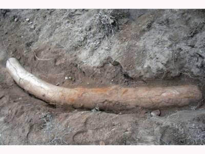 پاکستانی سائنسدانوں نے پنجاب میں 11 لاکھ سال پرانی ایسی چیز دریافت کرلی کہ دنیا دنگ رہ گئی، بڑی کامیابی