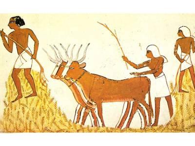 زمانہ قدیم کے انسانوں نے شادی کرنے کا رواج کیوں اپنایا؟ سائنسدانوں نے پیچھے چھپی ایسی وجہ بیان کردی کہ کوئی تصور بھی نہ کرسکتا تھا
