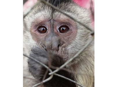 جوہانسبرگ،ریسکیو اہلکاروں نے 50بھوکے ،پیاسے پنجروں میں بند بندروں کی جان چھڑا دی
