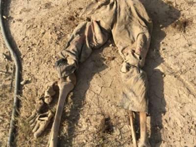 عراق میں دولت اسلامیہ کے زیر قیضہ علاقوں سے اجتماعی قبریں دریافت