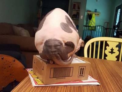 اس بلی کی پشت پر کس کا چہرہ نمودار ہوا ہے؟آپ بھی بتایئے