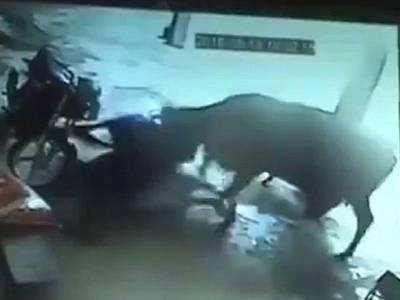 غیرت کے نام پر باپ نے اپنی نوجوان لڑکی کو قتل کرنے کی کوشش کی تو اس کی بھینس نے ایسا کام کر ڈالا کہ دیکھ کر آپ کی آنکھیں بھی کھلی کی کھلی رہ جائیں گی