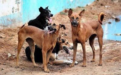 کراچی میں کتوں کے کاٹنے کے واقعات میں اضافہ ہو گیا