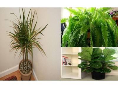 گھر کو زہریلے مادوں سے پاک رکھنے کے لئے یہ تین پودے اپنے گھر میں ضرور رکھیں