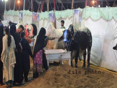 کراچی:مویشی منڈی میں 4نوسر باز خواتین نے بیو پاری سے 60ہزار روپے لوٹ لیے