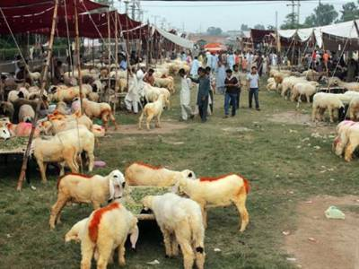عیدالاضحی ،حکومت نے پنجاب میں 108مدارس اور 9این جی اوز کو کھالیں اکھٹی کرنے کی اجازت دیدی