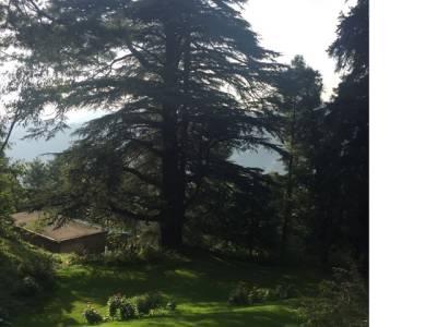 عمران خان ایوبیہ میں واقع 400سال پرانے تاریخی درخت کے پاس پہنچ گئے