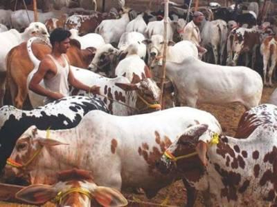عیدالاضحی پرپاکستانیوں نے جانوروں کی قربانی کیلئے 425ارب روپے خرچ کیے