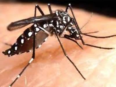 پنجاب ،ڈینگی وائرس نے سر اٹھا لیا، 300 کیسز سامنے آ گئے