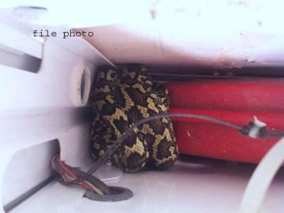 آزادکشمیر کے ایک گھر میں خوفناک اژدھا گھس گیا ،اہل خانہ کی چیخیں نکل گئیں