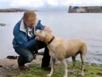 یہ کتا روزانہ سمندر میں تیر کر کس سے ملنے جاتا ہے؟ حقیقت جان کر آپ بھی کتے کو دوست بنانا چاہیں گے