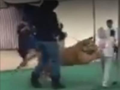 سعودی عرب میں خوفناک واقعہ، شیر کا نو عمر لڑکی پر حملہ اور پھر۔۔۔ ایسی ویڈیو سامنے آگئی کہ دیکھ کر انسان کانپ اُٹھے