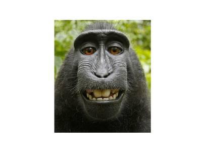 عرب ملک میں بندر کی نوجوان لڑکی کے ساتھ ایسی شرمناک حرکت کہ ہنگامہ برپا ہوگیا،16ہلاک، 50زخمی کیونکہ ۔ ۔ ۔