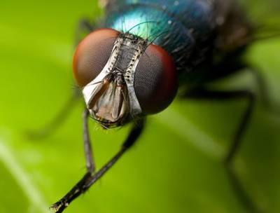جب کوئی مکھی کھانے کی چیز پر بیٹھتی ہے تو آخر کیا کرتی ہے؟ سائنسدانوں نے ایسا انکشاف کر دیا کہ آپ مکھی کو دیکھتے ہی اپنا کھانا چھپا لیں گے
