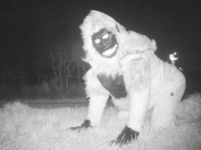 شہر میں شیر کی موجودگی کی اطلاع، پولیس نے سچ معلوم کرنے کیلئے رات کو جگہ جگہ کیمرے لگادئیے، لیکن یہ شیر نہیں تھا بلکہ۔۔۔
