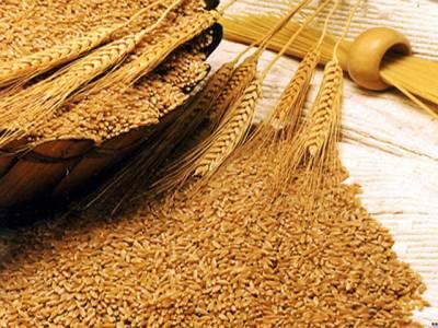 حکومت کا گندم کی امدادی قیمت 1300 روپے فی من پر برقرار رکھنے کا فیصلہ