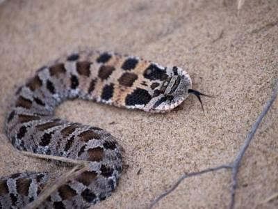 وہ خاتون جو سانپ کے ساتھ سویا کرتی تھی،اچانک سانپ کی طبیعت خراب ہوئی تو ڈاکٹر نے ایسی وجہ بتائی کہ لڑکی کے پیروں تلے زمین نکل گئی،ایسی کہانی کہ کسی کو بھی سوچنے پر مجبور کر دے