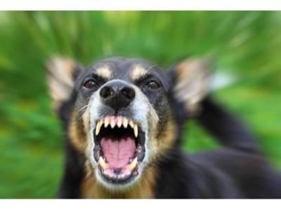 آپ کا پالا کتوں سے پڑجائے تو بھاگنے کی بجائے یہ کام کریں اورخود کو محفوظ رکھیں