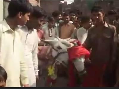 گوجرانوالہ میں دیہاتیوں نے 2گدھوں کو شادی کے بندھن میں باندھ دیا ، باراتیوں کی بکرے کے گوشت سے تواضع