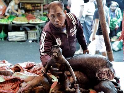 کس اسلامی ملک کے بازار میں چمگادڑ، چوہے اور بندر سرعام بیچے جارہے ہیں جنہیں لوگ مزے لے کر کھاتے ہیں؟ جواب جان کر آپ کی حیرت کی انتہا نہ رہے گی