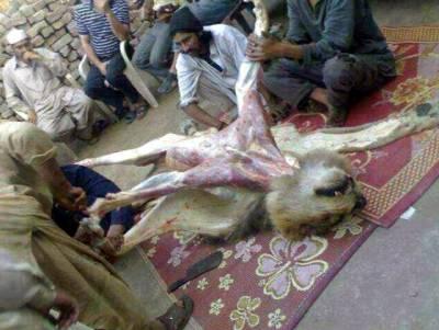 گدھے کے گوشت کے بعد اب پیش خدمت ہے ببر شیر۔۔۔ ایک کلو گوشت کی قیمت کیا ہے؟ پاکستانیوں کیلئے انتہائی حیران کن خبر آ گئی