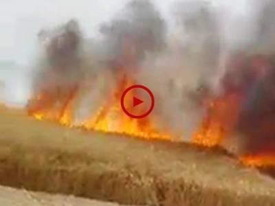 ماموں کانجن نواحی گاؤں53/3ٹکڑا میں چارکاشتکاروں کی15ایکڑ گندم کی کھڑی فصل جل کر خاکستر ہو گئی ویڈیو: شہبازاختر ۔ فیصل آباد