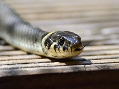 اس نادان شخص نے اپنے گھر میں موجود سانپ سے نجات حاصل کرنے کیلئے ایسا کام کردیا کہ پولیس نے گرفتار کرلیا