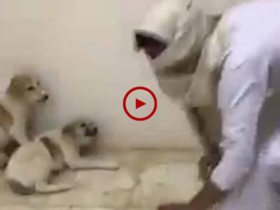 ہاہاہا۔ ایسی مزے کی ویڈیو کہ جسے دیکھ کر آپ کی ہنسی نہیں رکے گی۔ ویڈیو: حیدر سندھو۔ ساہیوال