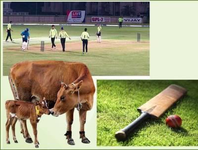 شاندار فتح کے بعد کرکٹ کپتان کو گائے انعام میں دے دی گئی، دیگر کھلاڑیوں کو کیا چیز ملی؟ جان کرآپ کو بھی بے حد حیرت ہوگی