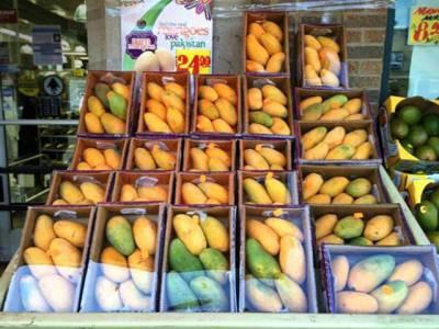پھلوں کا بادشاہ ''آم '' مارکیٹ میں آ گیا ،لیکن زرا ٹھہریں،خریدنے سے پہلے یہ خبر ضرور پڑھ لیں ،کہیں ایسا نہ ہو کہ لاعلمی میں آپ بھی ۔۔۔۔
