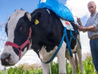 جرمن گائے کی گیس سے گھر اور فیکٹری میں ایندھن کا کام لیا جانے لگا